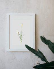 acuarela-botanica-donana-enmarcada-decoracion-marco-juncus