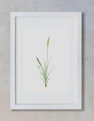 acuarela-botanica-donana-enmarcada-decoracion-marco-vertical-suelto-juncus