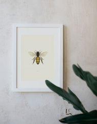 Ilustracion-acuarela-botanica-insectos-abeja-enmarcada-blanco