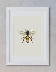Ilustracion-acuarela-botanica-insectos-abeja-enmarcada-blanco2