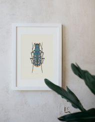 Ilustracion-acuarela-botanica-insectos-cylindera-enmarcada-blanco