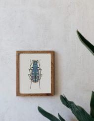 Ilustracion-acuarela-botanica-insectos-cylindera-enmarcada-madera