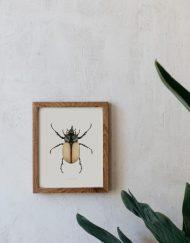 Ilustracion-acuarela-botanica-insectos-escarabajo-enmarcada-madera