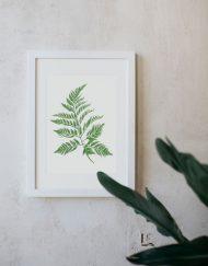 Ilustracion-Helecho-acuarela-botanica-campestre-enmarcada-blanco-Filicopsida