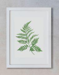 Ilustracion-Helecho-acuarela-botanica-campestre-enmarcada-blanco2-Filicopsida