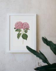 Ilustracion-hortensia-acuarela-botanica-campestre-enmarcada-blanco-Hydrangea-rosa