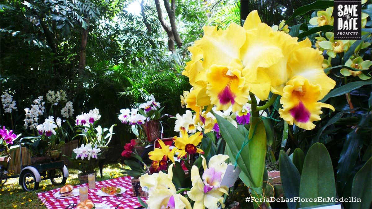 Flores, flores y más flores, Feria de las flores Medellín