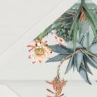 DETALLE-SOBRE-BLANCO-FORRO-CACTUS-invitacion-cactus