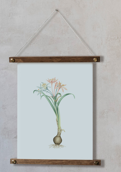 acuarela-botanica-donana-enmarcada-decoracion-bastidor-vertical-suelto-pancratium