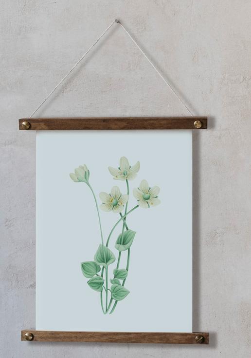 acuarela-botanica-donana-enmarcada-decoracion-bastidor-vertical-suelto-parnassia