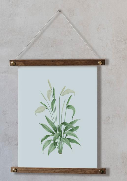 acuarela-botanica-donana-enmarcada-decoracion-bastidor-vertical-suelto-spathiphyllum