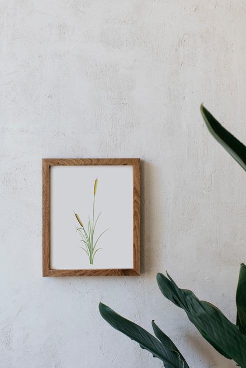 acuarela-botanica-donana-enmarcada-decoracion-marco-madera-vertical-juncus