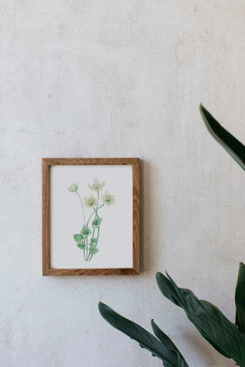 acuarela-botanica-donana-enmarcada-decoracion-marco-madera-vertical-parnassia