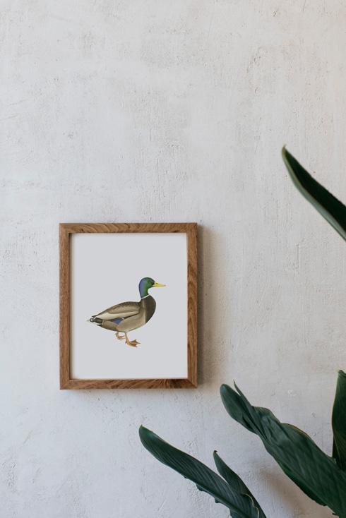 acuarela-botanica-donana-enmarcada-decoracion-marco-madera-vertical-pato