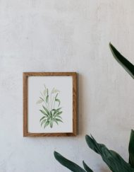 acuarela-botanica-donana-enmarcada-decoracion-marco-madera-vertical-spathiphyllum
