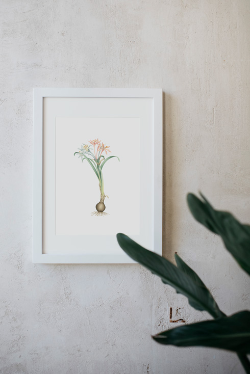 acuarela-botanica-donana-enmarcada-decoracion-marco-pandratium