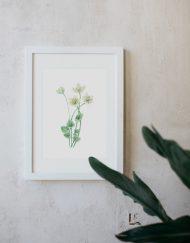 acuarela-botanica-donana-enmarcada-decoracion-marco-parnassia