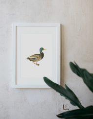 acuarela-botanica-donana-enmarcada-decoracion-marco-pato