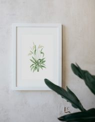 acuarela-botanica-donana-enmarcada-decoracion-marco-spathiphyllum