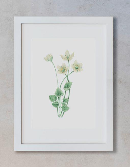 acuarela-botanica-donana-enmarcada-decoracion-marco-vertical-suelto-parnassia