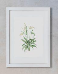 acuarela-botanica-donana-enmarcada-decoracion-marco-vertical-suelto-spathiphyllum