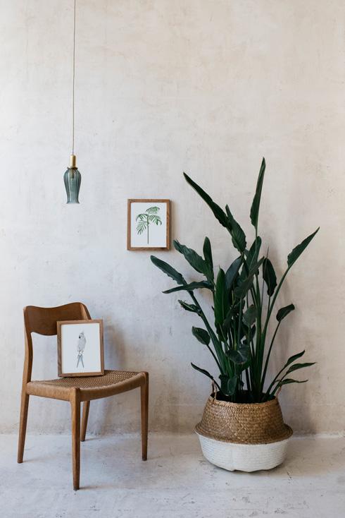 acuarela-botanica-tropical-enmarcada-decoracion-marco-loro-azul-ravenea