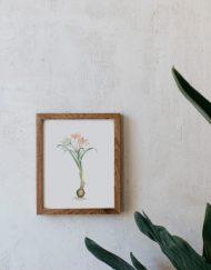 acuarela-botanica-tropical-enmarcada-decoracion-marco-madera-vertical-pancratium
