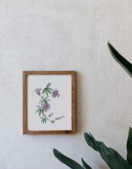 acuarela-botanica-tropical-enmarcada-decoracion-marco-madera-vertical-passiflora