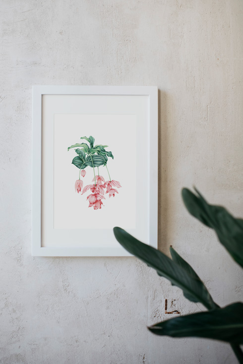 acuarela-botanica-tropical-enmarcada-decoracion-marco-medinilla