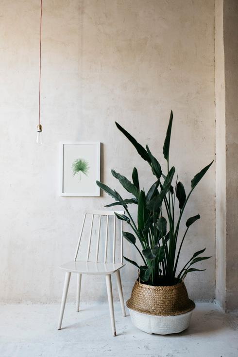 acuarela-botanica-tropical-enmarcada-decoracion-silla-blanca-camaerops