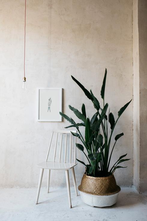 acuarela-botanica-tropical-enmarcada-decoracion-silla-blanca-loro-azul