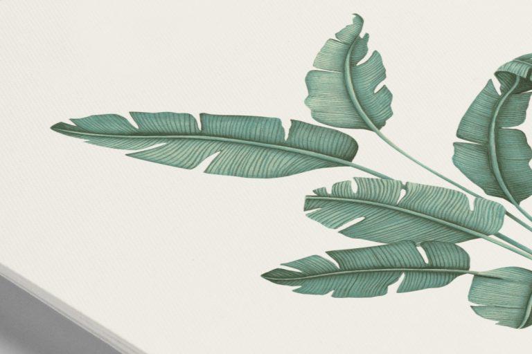 acuarela-laminas-decoracion-botanicas-acuarela-platanera-detalle