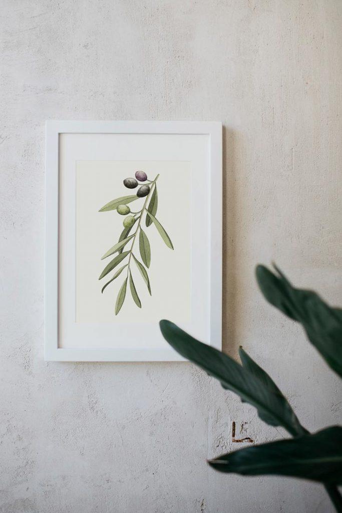 acuarela-botanica-olivos-aceitunas-campestre-lamina-decoracion-652-2
