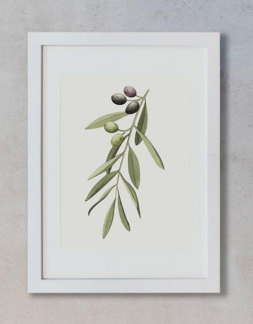 acuarela-botanica-olivos-aceitunas-campestre-lamina-decoracion-652-3