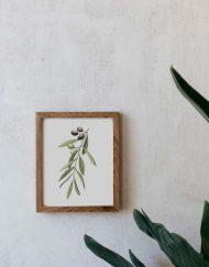 acuarela-botanica-olivos-aceitunas-campestre-lamina-decoracion-652-4