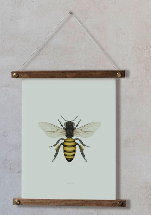 Ilustracion-acuarela-botanica-insectos-abeja-enmarcada-bastidor