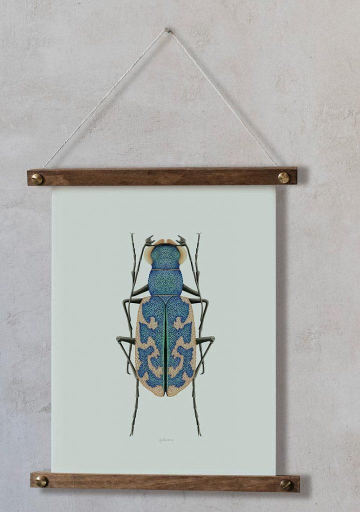 Ilustracion-acuarela-botanica-insectos-cylindera-enmarcada-bastidor