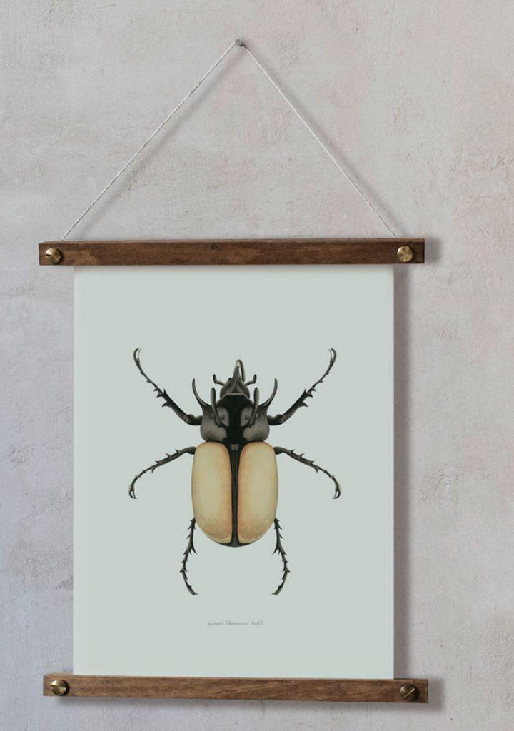 Ilustracion-acuarela-botanica-insectos-escarabajo-enmarcada-bastidor