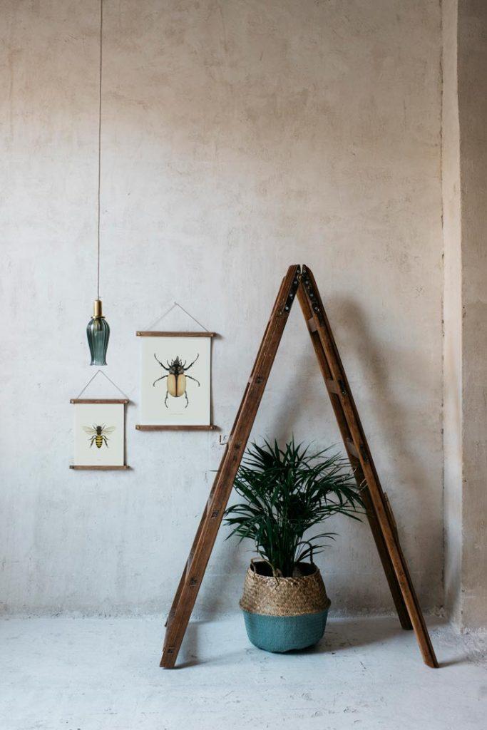 Ilustracion-acuarela-botanica-insectos-escarabajo-enmarcada-bastidor-escalera