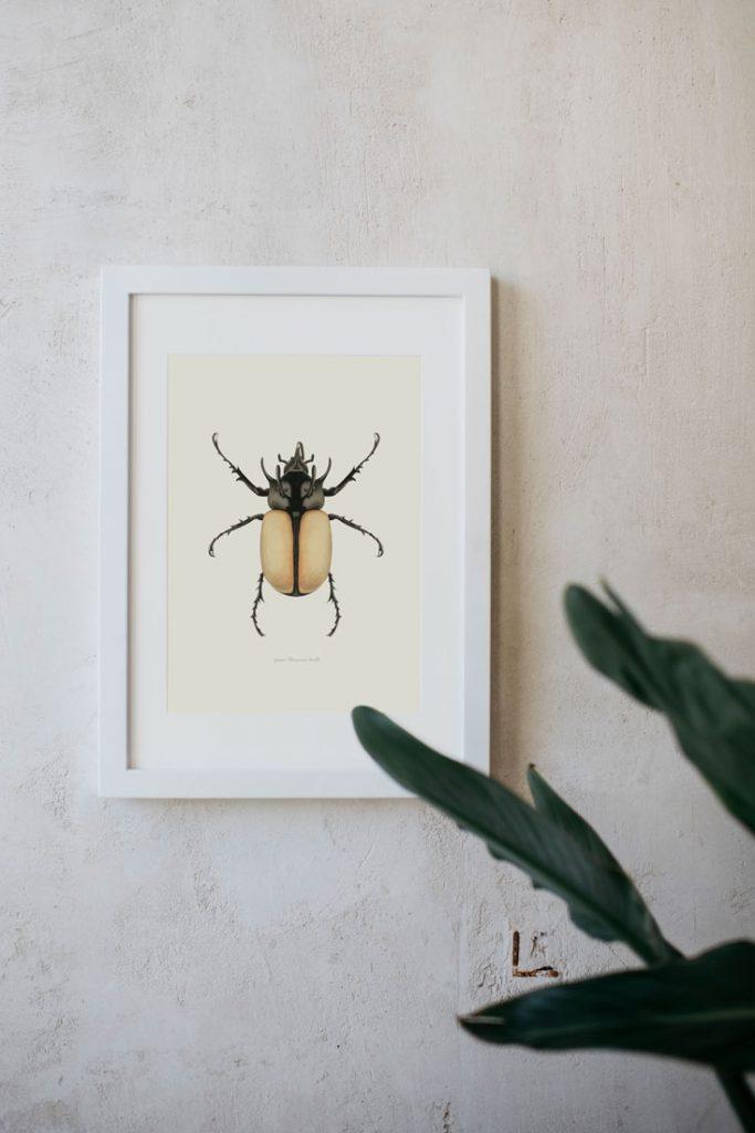 Ilustracion-acuarela-botanica-insectos-escarabajo-enmarcada-blanco