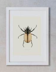 Ilustracion-acuarela-botanica-insectos-escarabajo-enmarcada-blanco2