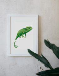 MOCKUP-marco-blanco-1-BICHOS-camaleon