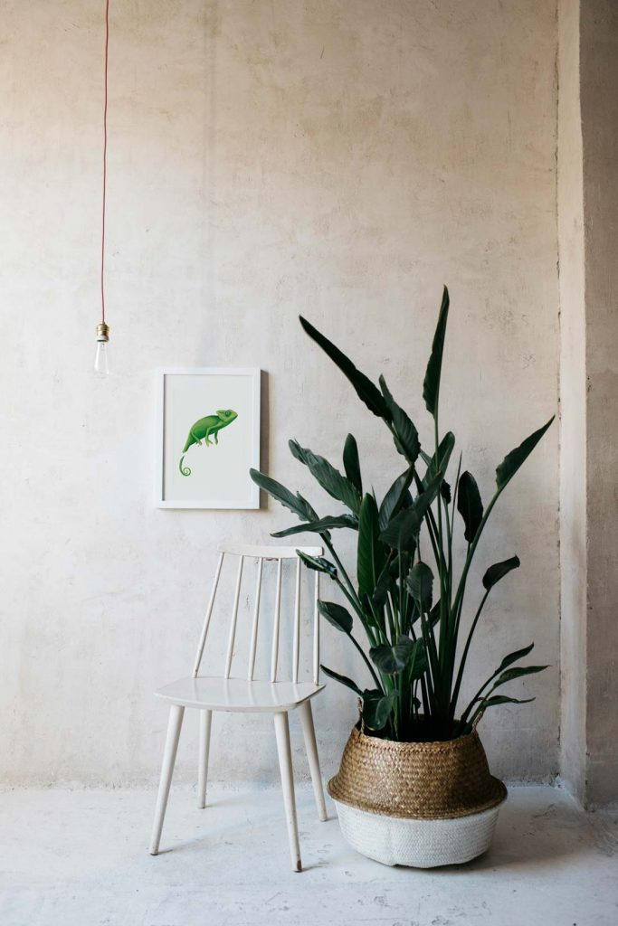 MOCKUP-silla-blanca-1-BICHOS-camaleon