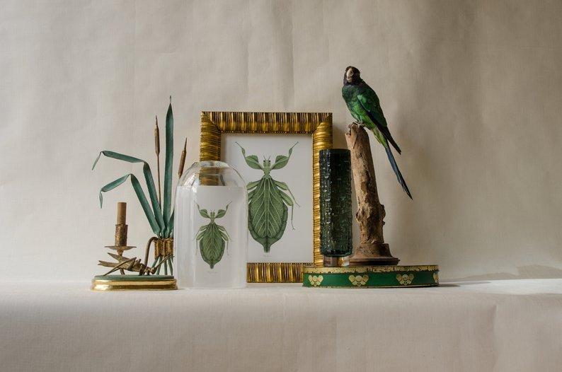 laminas botanicas insectos acuarela verde