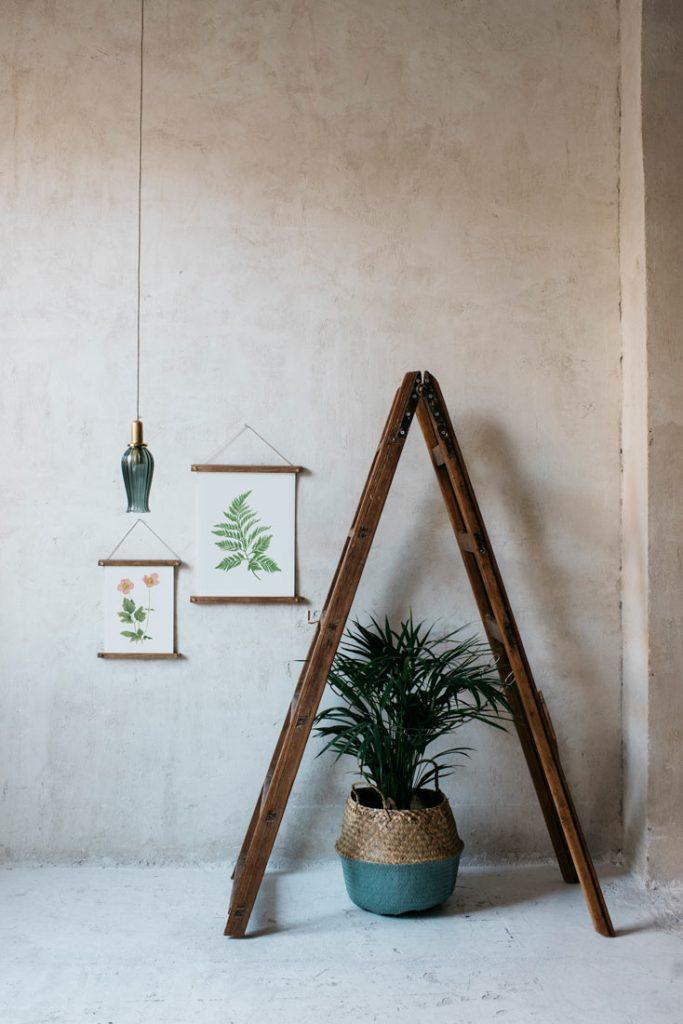 Ilustracion-Helecho-acuarela-botanica-campestre-enmarcada-bastidor-Filicopsida-escalera