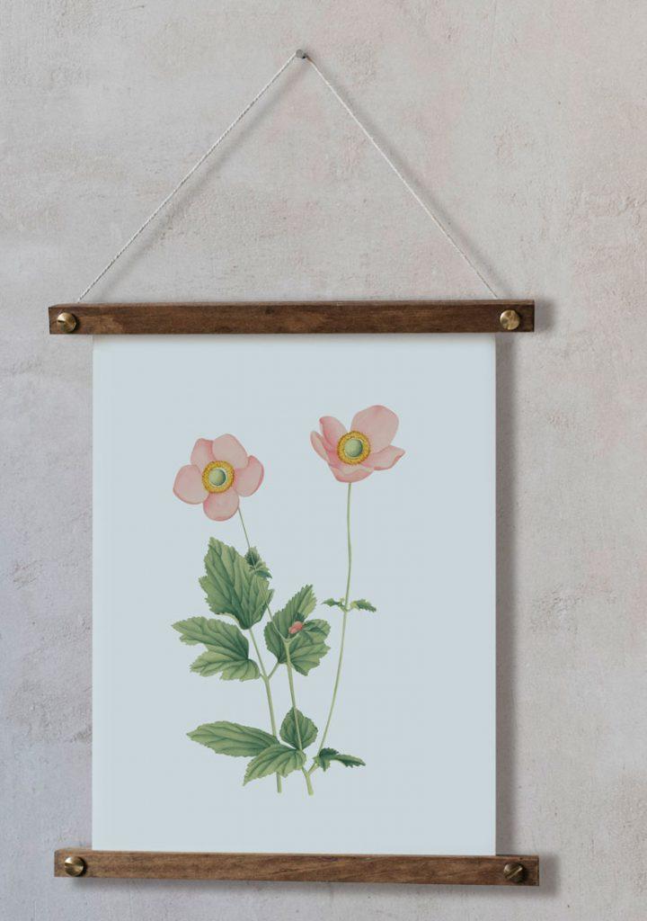 Ilustracion-acuarela-botanica-campestre-enmarcada-bastidor-Anemone-hupehensis