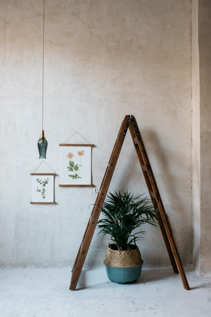 Ilustracion-acuarela-botanica-campestre-enmarcada-bastidor-Anemone-hupehensis-escalera