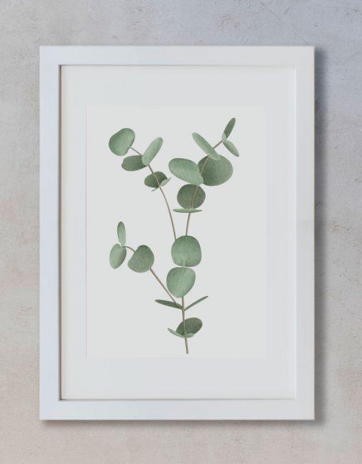 Ilustracion-acuarela-botanica-campestre-enmarcada-blanco2-Eucalyptus