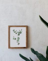 Ilustracion-acuarela-botanica-campestre-enmarcada-madera-Eucalyptus