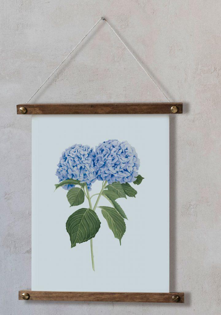 Ilustracion-hortensia-acuarela-botanica-campestre-enmarcada-bastidor-Hydrangea-azul
